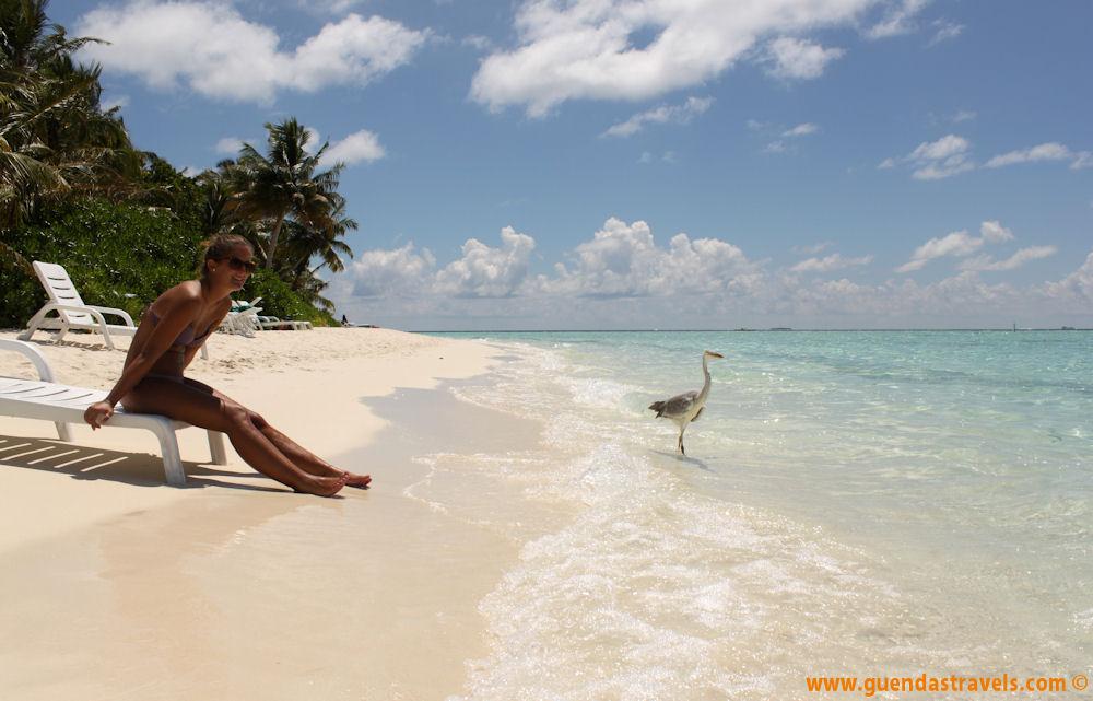 Guenda's Travels - Maldive