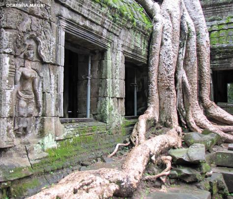 Trip or Treat - Cambogia - Ta Prohm