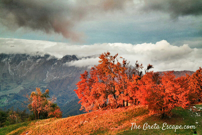 The-Greta-Escape---Autunno