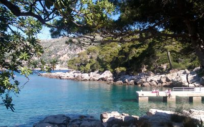 Cosa fare a Dubrovnik? Una gita sull'isola di Lokrum