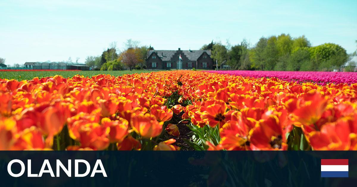 Cosa visitare in Olanda