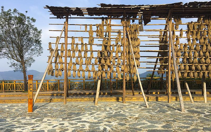Basha-Miao-Village-Strutture-per-far-essicare-il-riso
