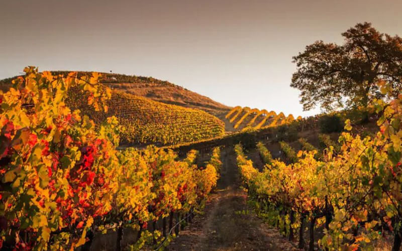 Foliage-Centro-Italia-Vigne