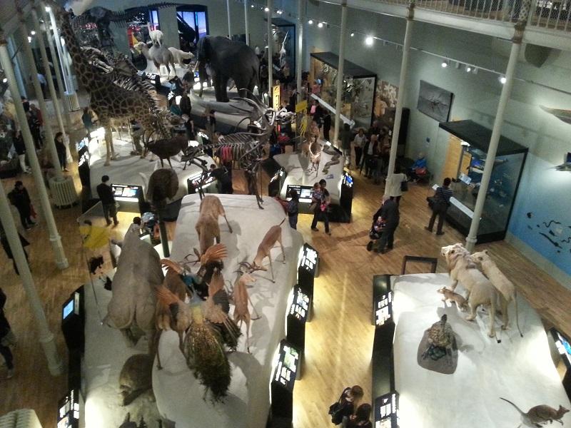 Edimburgo - Museo Nazionale di Scozia